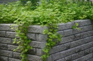 Lamoherukka muuri SA