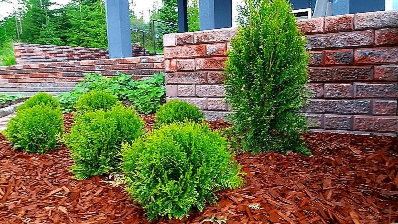 Havukasveilla ja pihakivimuurilla on synergia etu. Muuri korostaa ikivihantien kasvien vihreyttä ja tuo pyöreät ja kartiomaiset muodot hyvin esille. Havut puolestaan syventävät muurin väriä ja pehmentävät sen jyhkeää ryhdikästä olemusta. Pähkinänruskea koristekate estää rikkakasvien kasvua ja sointuu väriltään hyvin kokonaisuuteen.